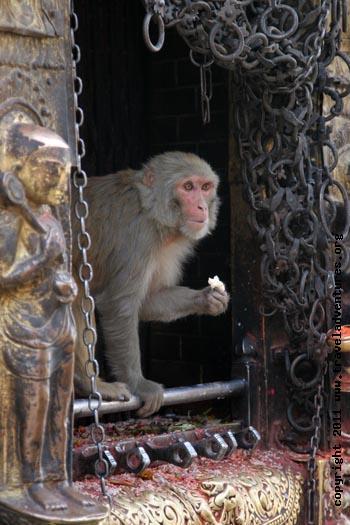 Swayambhunath-temple07cr